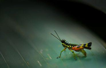 De Nature insectivore 62