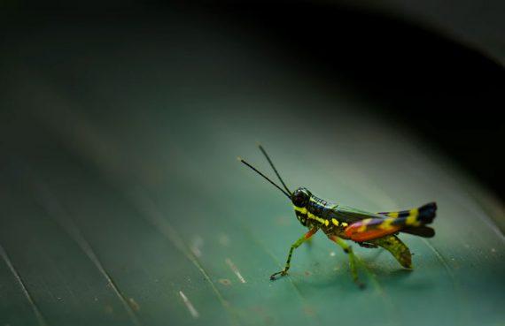De Nature insectivore 77